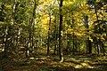 Nature reserve Ptaci stena in autumn 2011 (1).JPG