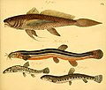 Naturgeschichte in Bildern mit erläuterndem Text (Taf. CX) (6059224968).jpg
