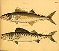 Naturgeschichte in Bildern mit erläuterndem Text (Taf. LXI) (6059214282).jpg