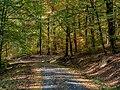 Naturpark Haßberge bei Bischofsheim 210903.jpg