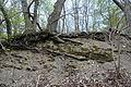 Naturschutzgebiet Herrenberg und Vorberg im Huy - Unterer Muschelkalk am Weinberg (4).JPG