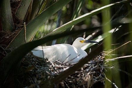 Waterbird in nest