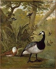 Oiseaux et faisans