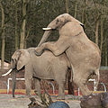 Nieuwe olifantjes?? (4222908817).jpg