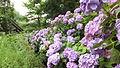 Nunobiki Herb Garden in 2014-7-6 No,34.JPG