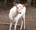 Oaklawn Farm Zoo, May 16 2009 (3539717044).jpg