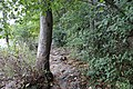 Ohiopyle State Park River Trail - panoramio (17).jpg