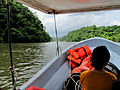 On the River to Rio Dulce (3747241996).jpg