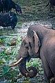 One Tusker.jpg