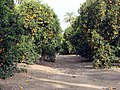 Orange Grove, Prospect Park, Redlands, CA 3-2012 (6833465214).jpg