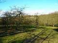 Orchard, Waydown Farm - geograph.org.uk - 344605.jpg