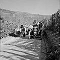 Ossenkar met oogstkuipen en tractor met druivenplukkers op de wijnberg, Bestanddeelnr 254-4193.jpg