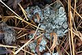 Otter scat, 234 Mitigation Wetlands, Manassas, Virginia.jpg