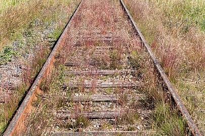 Overgrown Lysekil line 2.jpg