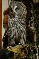 Owl, Oasis Whinfell Forest 04.jpg