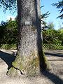 P1320107 Angers arboretum GA chene de Hongrie tronc rwk.jpg