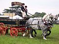 Pair of percherons.jpg