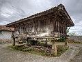 Panera asturiana (51138219073).jpg