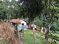 Pantanal, Miguel Pereira - RJ, Brazil - panoramio (23).jpg