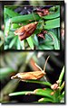 Papillon sur if2Taxus baccata.jpg