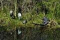 Paradise Everglades.jpg