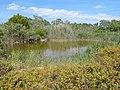 Parc natural de s'Albufera de Mallorca 08.jpg