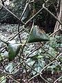 Parmadan Forest 19.jpg