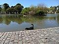 Parque Centenario - septiembre 2017 (03).jpg