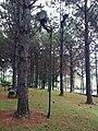 Parque da Cidade - Jundiaí - panoramio (51).jpg