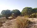 Parque de Doñana 20210610 17.jpg