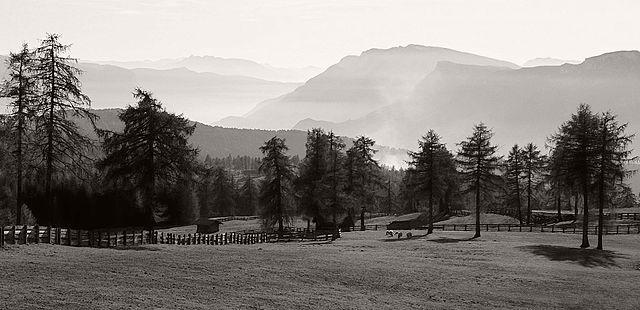 Pasture in Jenesien.jpg
