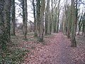 Path alongside Rooksdown Lane - geograph.org.uk - 1746827.jpg