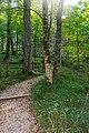 Path in Mammoth Cave National Park - Flickr - mamamusings.jpg