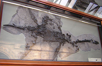 Plesiosaurus - Type specimen on display at the Natural History Museum