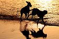 Perros Jugando (3751744007).jpg