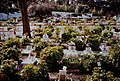 Pet Cemetery (Portugal, 1994).jpg