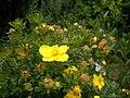 Pflanze-0493.JPG