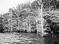 PhC42.Bx16.Great Lake.F3-4 (7349181544).jpg