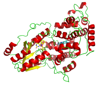 Photolyase - A deazaflavin photolyase from Anacystis nidulans, illustrating the two light-harvesting cofactors: FADH− (yellow) and 8-HDF (cyan).