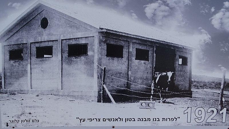 צילום רפת מקורית במושב כפר מלל