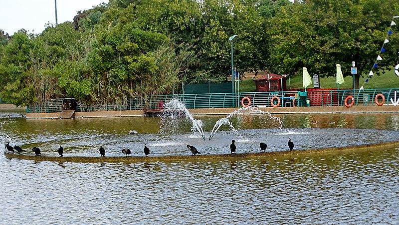 מזרקה באגם פארק רעננה