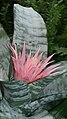 PinkFlower-Mendel.jpg