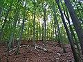 Pirna, Germany - panoramio (452).jpg