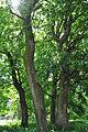 Plotytskyi-park-6928.jpg