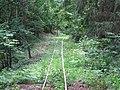 Podlaskie - Czarna Bialostocka - Knyszyn Forest - rt. Studzianki via Ozynnik - KFNGR xing - SE.JPG