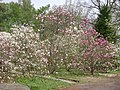 Poland. Warsaw. Powsin. Botanical Garden 035.jpg