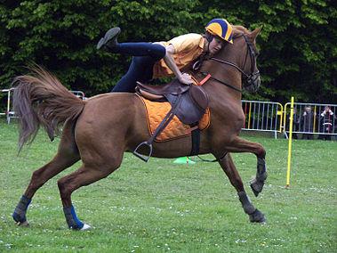 Pony games wikip dia - Jeux de poney ville gratuit ...