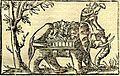 Porus's elephant cavalry, Cosmographia (1544).jpg