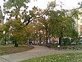 Praha, Nové Město, Karlovo náměstí, opadávající stromy (T).jpg