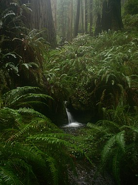 Prairie Creek Redwoods - Waterfall on Rhododendron Trail.jpg